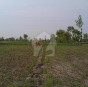 27 Kanal Agricultural Land For Sale in Jhang, Punjab