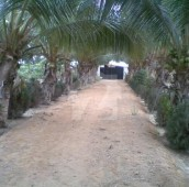 3 Bed 24 Kanal Farm House For Sale in Others, Thatta