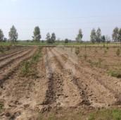 200 Kanal Agricultural Land For Sale in Sargodha to Sillanwali Road, Sargodha