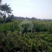 800 Kanal Agricultural Land For Sale in Shahkot Road, Nankana Sahib