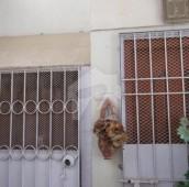 2 Bed 4 Marla Flat For Sale in Gulshan-e-Iqbal - Block 3, Gulshan-e-Iqbal