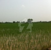 488 Kanal Agricultural Land For Sale in Sargodha, Punjab