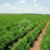 196 Kanal Agricultural Land For Sale in Others, Kasur