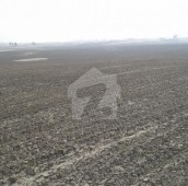 100 Kanal Agricultural Land For Sale in Jhang, Punjab
