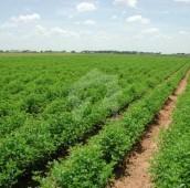 26.7 Kanal Agricultural Land For Sale in Al Rehman Garden Phase 3, Al Rehman Garden
