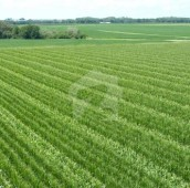 100 Kanal Agricultural Land For Sale in Lodhran Road, Multan