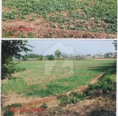 72 Kanal Agricultural Land For Sale in Tarlai, Islamabad