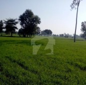320 Kanal Agricultural Land For Sale in Faisalabad Road, Shahkot