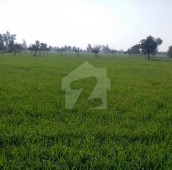 800 Kanal Agricultural Land For Sale in Lahore - Sheikhupura Road, Shahkot