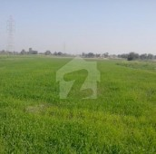 280 Kanal Agricultural Land For Sale in Sangla Hill Road, Shahkot
