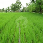 416 Kanal Agricultural Land For Sale in Raiwind Road, Kasur