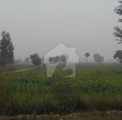 320 Kanal Agricultural Land For Sale in Pattoki, Kasur