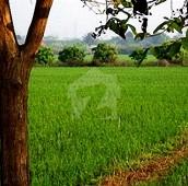 1.25 Kanal Agricultural Land For Sale in Kanganpur, Kasur