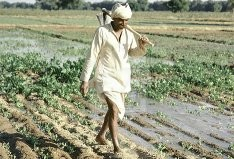 PPP Allotted 56,187 Acres Of Land To Farmers