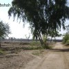2 Acres Agricultural Land For Sale