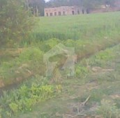 320 Kanal Agricultural Land For Sale in Jhang Road, Sargodha