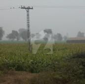 800 Kanal Agricultural Land For Sale in Kasur, Punjab