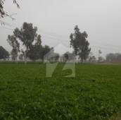 1600 Kanal Agricultural Land For Sale in Kasur, Punjab