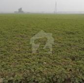280 Kanal Agricultural Land For Sale in Kasur, Punjab