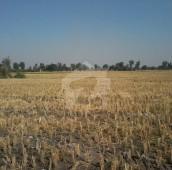 70 Kanal Agricultural Land For Sale in Buchey Ki Road, Nankana Sahib