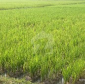 3 Bed 514 Kanal Agricultural Land For Sale in Sargodha Road, Jhang