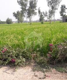 6 Kanal Farm House For Sale in Ferozepur Road, Lahore
