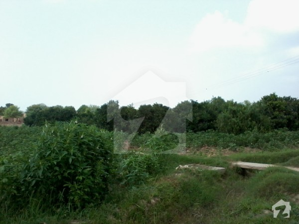 Excellent agricultural land for sale ahmedpur road bahawalpur 1258516 zameen - Profitable crops small plots ...