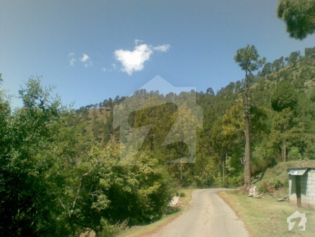 Property For Sale Muree