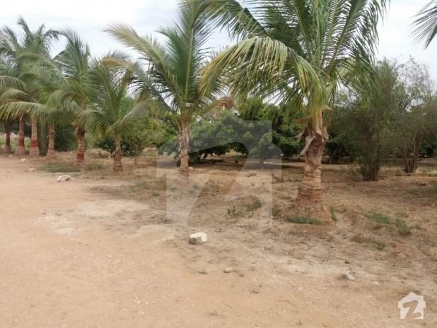 Image Result For Memon Farm House Karachi