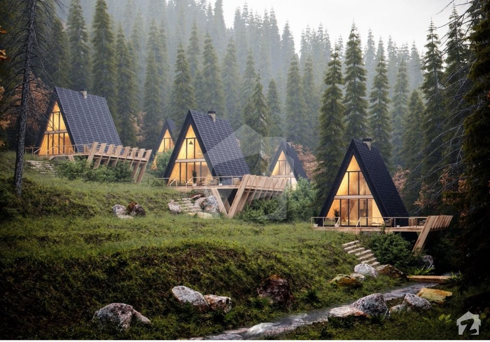 Snow Pines