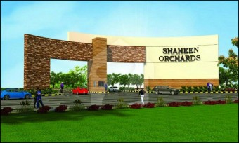 Shaheen Orchards